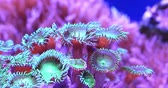 tentáculo : Scenic ultra HD 4K video with macro view of color corals in underwater tropical sea