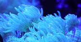 Scenic ultra HD 4K video with macro view of color corals in underwater tropical sea