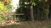 abandoned alley : Autumn abandoned park in the foliage, germany Stock Footage