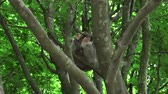 macaco : Barbary monkey eats salad on the tree Vídeos
