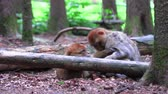 сонный : Barbary monkeys sleep on earth with the whole family