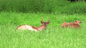 тварь : deer family resting in the meadow