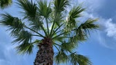 Palm trees blue sky bottom view