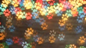 dog foot bokeh light as background. Colorfull bokeh.