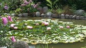 плавание : Sparrows bathe in the garden pond on lily pads