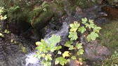 nobre : Noble grave waterfalls in the Black Forest Stock Footage