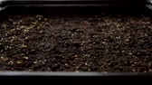 window gardening : Closeup of home vegetables growing from seeds on window sill Stock Footage