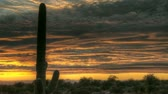 HDR Timelapse Arizona Cactus at sunset while dark and red clouds passing by Stok Video
