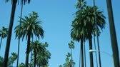 Driving through palm trees on a street with blue sky