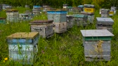 vespa : Bee apiary at the edge of the forest. Bee houses. Vídeos