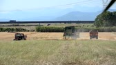 winnowing : Combine harvesters in action in the Tuscan countryside