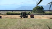 Combine unloading the harvest in the Tuscan countryside
