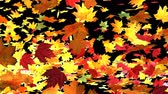 colorful autumn leafs blown by wind transparent background