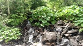 лиственный : Waterfall water flowing from mountain forest landscape Fast flowing liquid among the rocks rocks and green tree beech nature Falling waterfall Стоковые видеозаписи