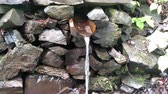 karpaten : Spring water flowing from the mountain along a wooden gutter Fresh liquid source of wooden channel