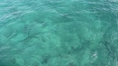 Background of wavy green blue Florida Atlantic ocean water with large rocks below the surface on a sunny winter day. Stock Footage