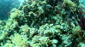 animal : Tropical coral reef and fishes on Red Sea.