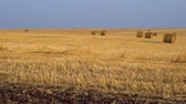 caution : Large agricultural field. Huge amount of harvested hay, rolled into bales. 4K Vidéos Libres De Droits