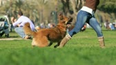 belo : Woman and dog playing in the park. Slow motion