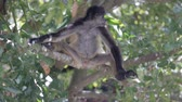 babies : Monkey on a tree in the wild