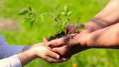 símbolo : Hands of an elderly woman and a baby holding a young plant against a green natural background in spring. Ecology concept