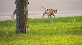 razem : Girl walking her pug puppy in a park. Wideo