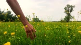 medicina alternativa : Womans Hand Caressing Grass Summer Concept Slow Motion Background.