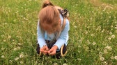 sopro : Cute little girl having fun looks at Dandelion seeds while relaxing in the park.