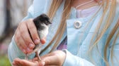nascido : Newborn chicken in children hands. Baby chick on a human palm closeup, on blurred background.