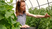 estufa : Young woman gardener working with plants in greenhouse. A girl using a laptop, checks how tomatoes and cucumbers grow. Care of plants, health, ecology. Vídeos