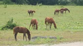 campo : Horse grazing on green meadow near forest on sunny day. Herd horses grazing on pasture. Farm animals graze on green meadow.