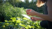 amatör : Farmer girl with digital tablet, vegetables crop in the kitchen garden. Harvest time. Family farmers. The concept of organic food. Stok Video