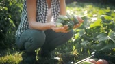 checkered : Farmer girl with vegetables crop in the kitchen garden. Harvest time. Family farmers. The concept of organic food. Stock Footage