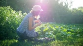 amatör : Farmer girl with vegetables crop in the kitchen garden. Harvest time. Family farmers. The concept of organic food. Stok Video