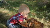 младенец : Cute toddler boy, sitting on the grass at park.