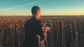 подсолнечник : Farmer agronomist holds tablet touch pad computer in the sunflower field and examining crops before harvesting. Agribusiness concept. Agricultural engineer is walking along a sunflower field.