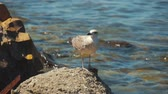 pés : Funny seagull bird standing on the seashore close up.