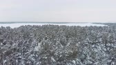 fir : Aerial view low flight over snowy spruce forest in winter. Aerial shot large pine forest covered with snow at winter. Stock Footage