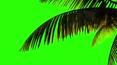Animation palm branch and leaves in the wind on a green background. Keying, green background alpha channel