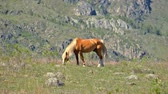 veld : Horse in Altai mountains, Russia