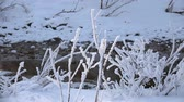 Panoramic video of stream near Altai river Katun at morning time in winter, Siberia, Russia