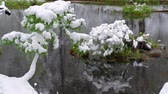 sibiř : Pond in bonsai Park of the Novosibirsk botanical garden under the snow in late Spring snowfall. Siberia, Russia