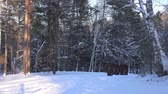monastic : Group of monks pilgrims in hood robe walking along winter snow trail in forest Stock Footage