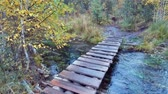 brooks : Crossing small wooden boardwalk bridge over forest creek near Blue Geyser lake in Altai mountains in rainy Autumn day Stock Footage
