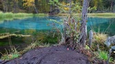 гейзер : Panorama of the Blue Geyser in Altai mountains in rainy Autumn day Стоковые видеозаписи