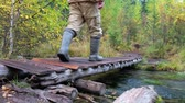 arranque : Tourist man in boots and encephalitis suit crossing small wooden boardwalk bridge over forest creek in Altai mountains in rainy Autumn day Stock Footage