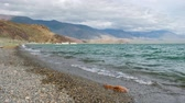 Beach on the shore of the mongolian lake. Tolbo-Nuur.
