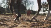 paardrijden : Legs of brown horse in slow motion outdoors