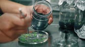 agriculture : Biological Laboratory Work With Plants For Agriculture
