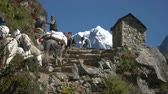 vysočina : NAMCHE, NEPAL - OKTOBER 22, 2017: A group of tourists climbs a steep trail in the Himalayas near Namche village on oktober 22, 2017 in Namche, Nepal Dostupné videozáznamy